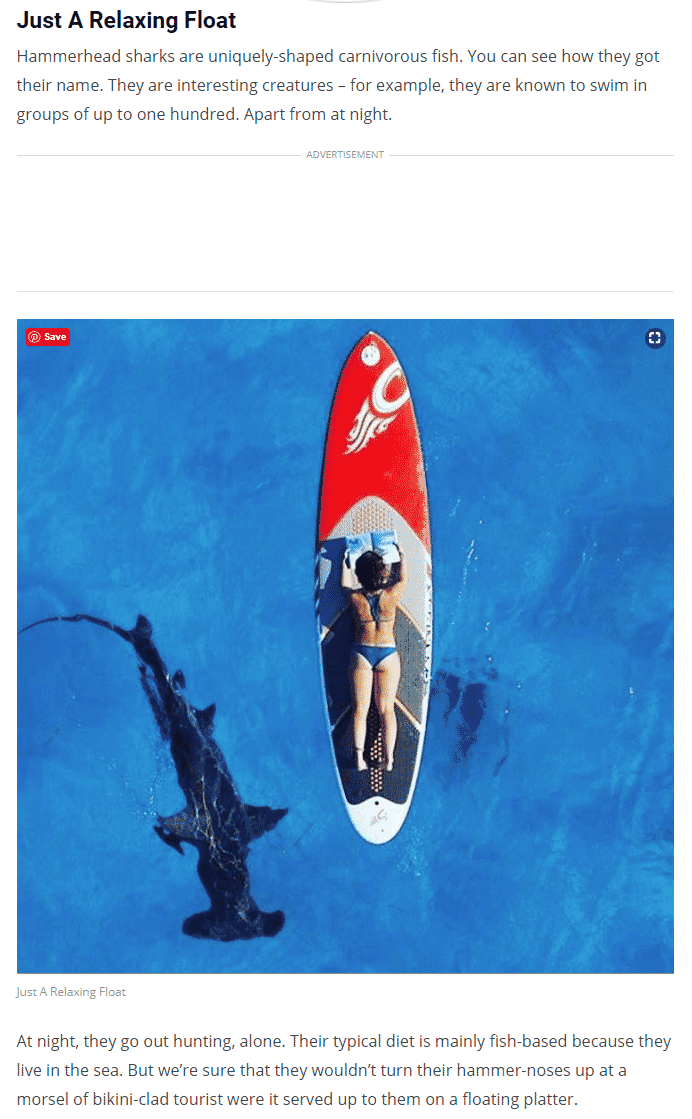 Reading a book on surf board while a hammer head shark swims below